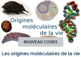 moocoriginemoleculairevie.jpg